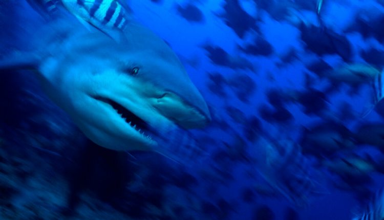 The Problem With Problem Sharks