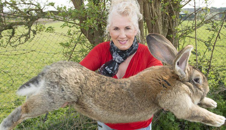 Darius, 'World's Longest Rabbit,' Is Missing